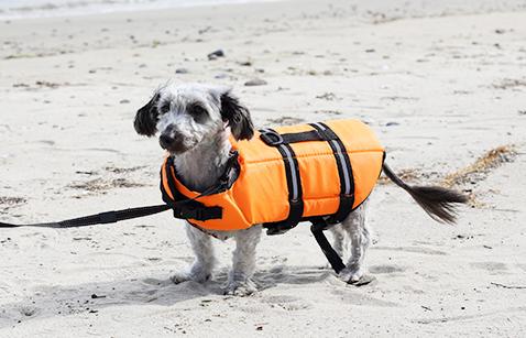 犬用レンタル用品